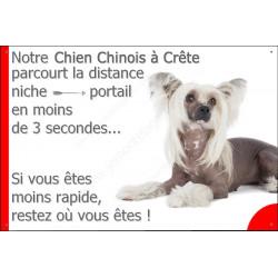 Plaque 24 cm 3SEC, Distance Niche - Portail, Chien Chinois à Crête Couché
