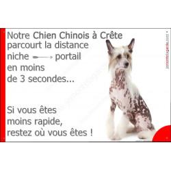 """Chien Chinois à Crête Assis, plaque """"distance Niche - Portail"""" 24 cm 3SEC"""
