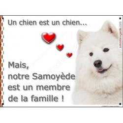 Plaque 16 cm LOVE Membre de la Famille, Samoyède Tête