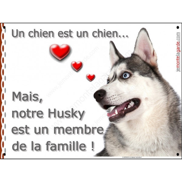 """Husky Gris Tête, plaque Portail Attention """"un chien est membre de la famille"""", pancarte panneau affiche photo"""