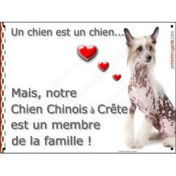 Plaque 2 Tailles LOVE Membre de la Famille, Chien Chinois à Crête Assis