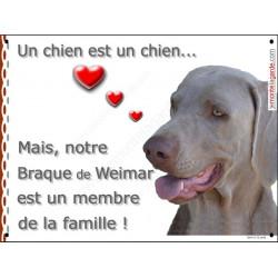 Pancarte portail intérieure ou extérieur qui met en valeur votre Braque de Weimar, car ce chien est un membre de la famille !