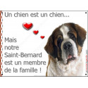 """St-Bernard Tête, plaque """"Membre de la Famille"""" 2 tailles LOVE A"""