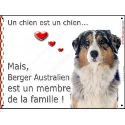Berger Australien Bleu Merle tête, plaque Attention, un chien est un chien, affiche panneau pancarte, membre de la famille !