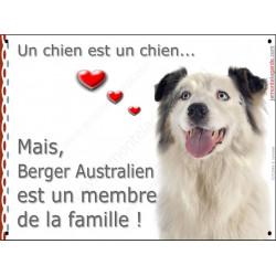 Berger Australien Blanc et Bleu Merle tête, plaque Attention, un chien est un chien, affiche panneau pancarte