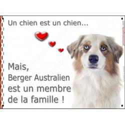 Berger Australien Blanc et Rouge Merle tête, plaque Attention, un chien est un chien, affiche panneau pancarte membre de famille