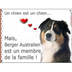 Berger Australien Tricolore noir tête, plaque Attention, un chien est un chien, affiche panneau pancarte membre famille