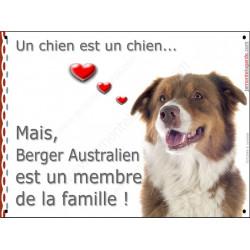 Berger Australien Tricolore Rouge tête, plaque Attention, un chien est un chien, affiche panneau pancarte membre famille
