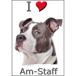 """I love Am-Staff Bleu"" Sticker photo 4 tailles, 4 possibilités !"