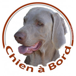 "Sticker rond ""Chien à Bord"" 15 cm, Am-Staff Bleu Tête"