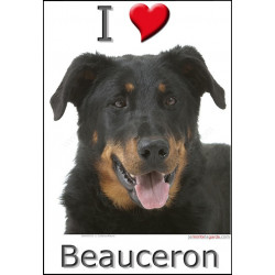 """I love Beauceron"" Sticker photo 3 tailles, 4 possibilités !"