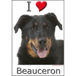 Sticker, Berger de Beauce Tête, 4 tailles, 4 possibilités ! Beauceron photo