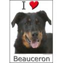 Sticker, I love Beauceron Tête, 4 tailles, 4 possibilités !