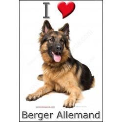 Sticker autocollant, Berger Allemand poils longs couché, 4 tailles, 4 possibilités !