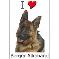 Sticker autocollant, Berger Allemand poils courts tête, 3 tailles et 4 possibilités