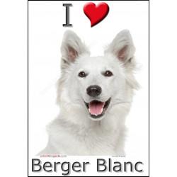 Sticker autocollant, Berger Blanc tête, 4 tailles, 4 possibilités !