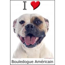 """""""I love Bouledogue Américain"""" Sticker photo 4 tailles, 4 possibilités !"""
