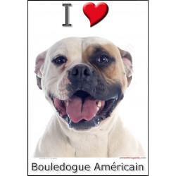 Sticker autocollant, Bouledogue Américain blanc tâche fauve tête, 4 tailles, 4 possibilités !