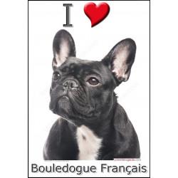 Sticker autocollant, Bouledogue Français Noir bringé tête, 4 tailles, 4 possibilités !