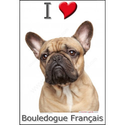 """I love Bouledogue Français"" Sticker photo 4 tailles, 4 possibilités !"