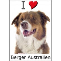 Sticker autocollant, Berger Australien Tricolore Rouge Tête, 4 tailles, 4 possibilités !