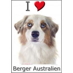 Sticker autocollant, Berger Australien Blanc et Rouge Merle Tête, 4 tailles, 4 possibilités !
