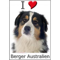 Sticker autocollant, Berger Australien Tricolore Noir Tête, 4 tailles, 4 possibilités !
