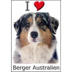 Sticker autocollant, Berger Australien Bleu Merle Tête, 4 tailles, 4 possibilités !