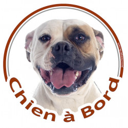 """Sticker autocollant rond """"Chien à Bord"""" 15 cm, Bouledogue Américain Blanc-Fauve Tête adhésif"""