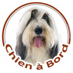 """Bearded Collie, sticker """"Chien à Bord"""" 15 cm - 3 ans"""
