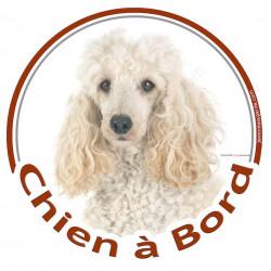"""Sticker autocollant rond """"Chien à Bord"""" 15 cm, Caniche Blanc Tête adhésif"""