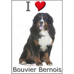 Sticker autocollant, Bouvier Bernois Assis, 4 tailles, 4 possibilités !