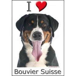 Sticker autocollant, Bouvier Suisse Tête, 4 tailles, 4 possibilités ! 1 Adhésif
