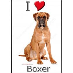 Sticker autocollant, Boxer Fauve Assis, 4 tailles, 4 possibilités !