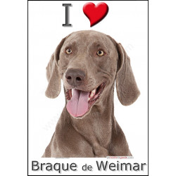 """I love Braque de Weimar"" Sticker photo 4 tailles, 4 possibilités !"