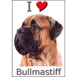"""I love Bullmastiff"" Sticker photo 4 tailles, 4 possibilités !"