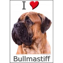 Sticker autocollant, Bullmastiff Fauve Tête, 4 tailles, 4 possibilités !
