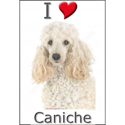 """I love Caniche"" Sticker photo 4 tailles, 4 possibilités !"