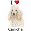"""I love Caniche"" Sticker photo 4 tailles, 4 possibilités !"