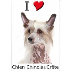 Sticker autocollant, Chien Chinois à Crête Tête, 4 tailles, 4 possibilités !