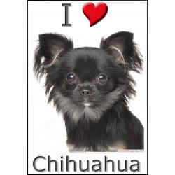 Sticker autocollant, Chihuahua Poils Longs Noir et Feu Tête, 4 tailles, 4 possibilités !