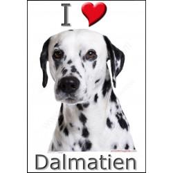 Sticker autocollant, Dalmatien Tête, 4 tailles, 4 possibilités !