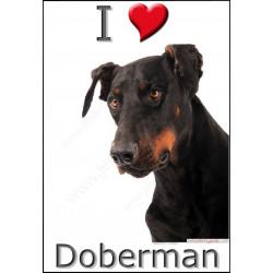 """Sticker autocollant """"I ❤️ Doberman"""", 3 tailles, 4 possibilités ! Panneau photo adhésif Love"""