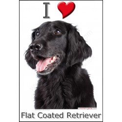 """I love Flat-Coated Retriever"" Sticker photo 3 tailles, 4 possibilités !"