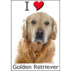 Sticker autocollant, I love Golden Retriever Tête, 3 tailles, 4 possibilités !