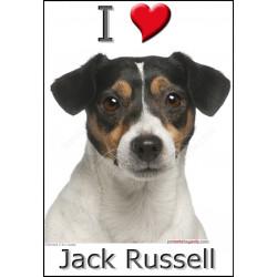 Sticker autocollant, Jack Russell Tricolore Tête, 4 tailles, 4 possibilités !