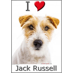 Sticker autocollant, Jack Russell Poils Durs Fauve et Blanc tête, 4 tailles et 4 possibilités