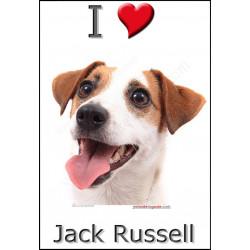 Sticker autocollant, Jack Russell Blanc et Fauve Tête, 4 tailles, 4 possibilités !