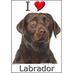 Sticker autocollant, Labrador Chocolat Tête, 4 tailles, 4 possibilités !