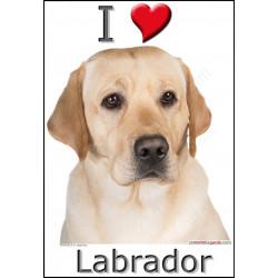Sticker autocollant, Labrador Sable jaune Tête, 4 tailles, 4 possibilités !